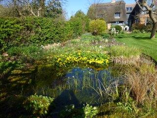 Pond and marsh marigolds