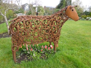 Sheep underplanted with 'Heart's Delight'