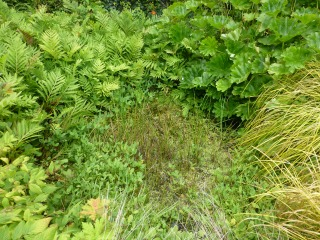Pond pre-clearance