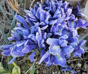 Lady Beatrix Stanley on a frosty day